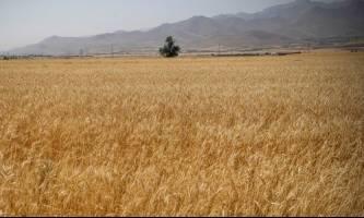 دستور جهانگیری برای ابلاغ سریعتر نرخهای تضمینی کشاورزی