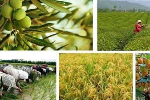 جزئیات دستمزدکارگران مشاغل کشاورزی