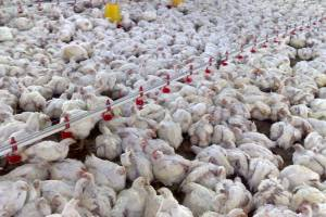 گزارشی از ابتلای پرندگان به آنفلوانزای H۵N۶ در تهران نداشتیم