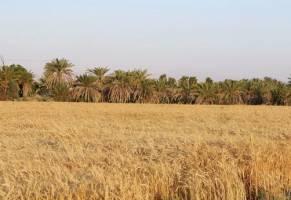 تاکتیک سیاه دولت مقابل کشاورزان