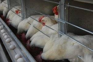 هشدار برای بازار مرغ در ماه رمضان