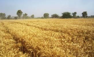 جزئیات گزارش متوسط فروش محصولات کشاورزی