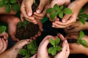 30 صندوق تخصصی حمایت از بخش کشاورزی ایجاد می شود