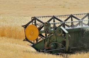 پیشنهاد قیمت ۱۸۰۰ تومانی برای گندم در سال زراعی آینده