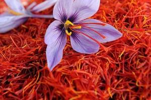انعقاد ۱۱ هزار و ۹۰۰ قرارداد آتی زعفران رشتهای در بورس کالا