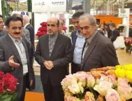 ایران می تواند قطب تولید گل در منطقه شود