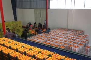 جزئیات تنظیم بازار میوه شب عید