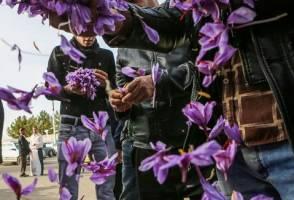 صادرات بیش از 252 میلیون دلار زعفران