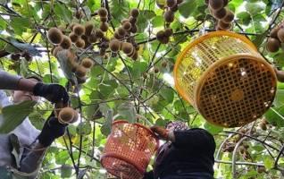 بازار میوه عید آرام خواهد بود