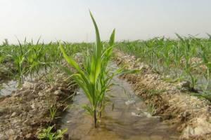 تاراج آب ایران در بخش کشاورزی