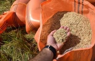 دولت از اعمال ممنوعیت فصلی واردات برنج خودداری کند