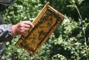 مذاکره با آفریقای جنوبی برای صادرات عسل