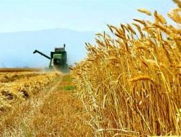 پیش بینی برداشت ۱۴.۵ میلیون تن گندم از مزارع کشور