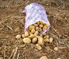 رفع ممنوعیت صادرات سیب زمینی و پیاز ابلاغ شد