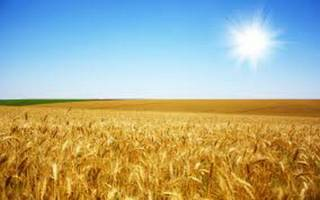 تصمیم ۱۶ میلیاردی ترامپ و زیان کشاورزان