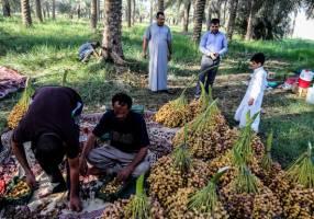 پیشنهاد حذف تعرفه صادرات خرما با پایان ماه مبارک رمضان