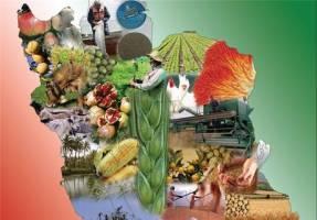 محصولات کشاورزی چقدر افزایش قیمت داشتند؟