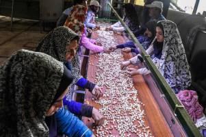 افزایش ۲۳ درصدی اشتغال در روستاها