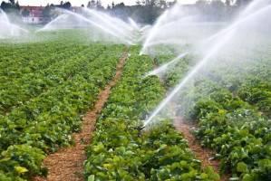 اختلاف نظر دو وزارتخانه بر سر مقدار آب مصرفی در بخش کشاورزی+توضیح کارشناسان
