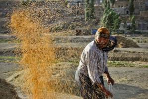 ۸ طرح خودکفایی محصولات کشاورزی چشمانتظار نگاه دولت