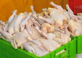 اختلافنظر درباره قیمت مرغ ادامه دارد