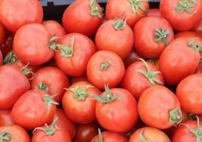 خرید حمایتی گوجه فرنگی با قیمت ۱۱۵۰ تومان آغاز شد