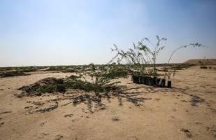فاینانس ۱.۷میلیاردی چین برای احیای ۵۵۰ هزارهکتار از اراضی خوزستان