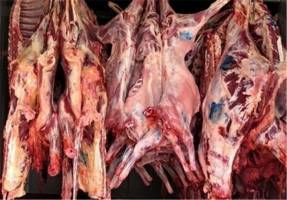قیمت هر کیلو گوشت گوسفندی، ۱۰۴ هزارتومان است