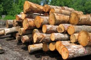 قاچاق چوب افزایش یافت