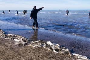 صید ماهیان استخوانی دریای خزر ۱۵ مهر آغاز می شود