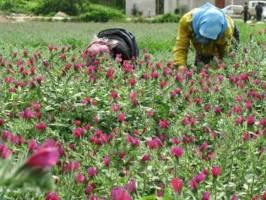 ۹۵۰۰ میلیارد تومان به طرحهای اشتغالزای روستایی پرداخت شد