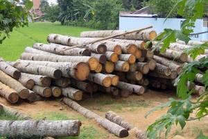 جزئیات اجرای طرح زراعت چوب