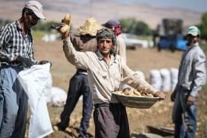شناسایی ۱۰۰ روستای بدون بیکار در کشور
