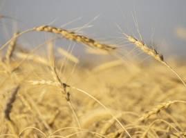 ظرفیت ۲ میلیارد دلاری صادرات محصولات کشاورزی به اوراسیا