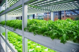 مگاپروژههای کشاورزی لنگِ زمین است