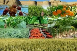 اصلاح قیمت بنزین تاثیری بر بخش کشاورزی ندارد