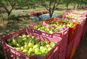 کشتیرانی حمل محصولات کشاورزی صادراتی را متوقف کرد