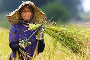 اشتغالزایی بومی ۱۱۴ روستای کشور را بدون بیکار کرد