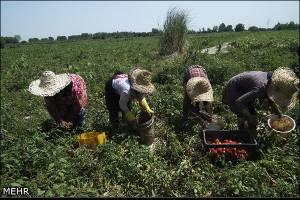 افت مشاغل کشاورزی در ۱۴ سال گذشته