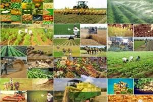 شش میلیون تن محصول کشاورزی خریداری شد