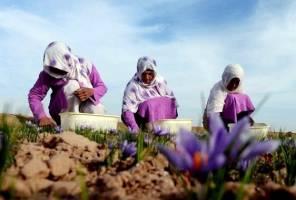 عرضه محصولات ۱۰ هزار کشاورز در بازار با روش جدید تأمین مالی