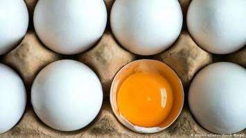 تخممرغ تقلبی نداریم