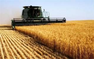 وضعیت مطلوب کشت گندم در سال زراعی جاری