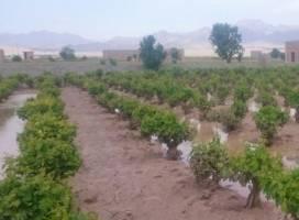 ۱۹ هزار میلیارد ریال غرامت به کشاورزان سیل زده پرداخت شد