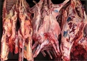 کمبودی در عرضه دام و گوشت قرمز نداریم