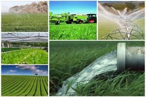 ۴ اتفاق مهم بخش کشاورزی در سال ٩٨