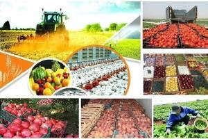 ظرفیت بالای بخش کشاورزی برای جهش تولید