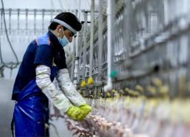 تزریق مرغ منجمد به بازار یا تزریق سم به صنعت مرغداری؟