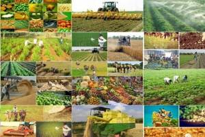 جزئیات ۸برنامه جهش تولید کشاورزی