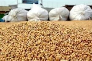 کالای ۵۳ شرکت واردکننده نهاده های دامی رسوبی شده است